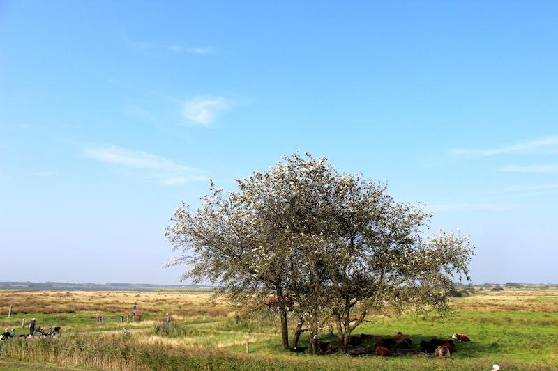Tüskendörsee Landschaft Borkum