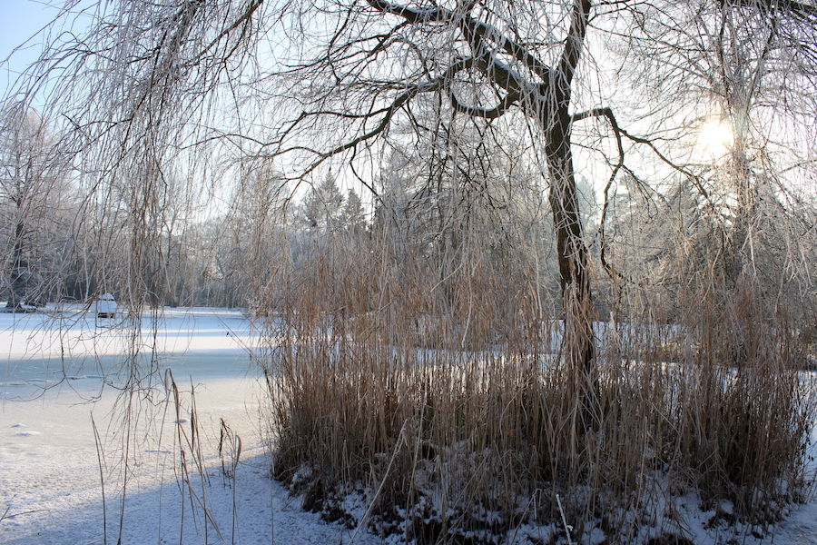 Wortkonfetti-Blog-Bremen-Winter-Buergerpark-06