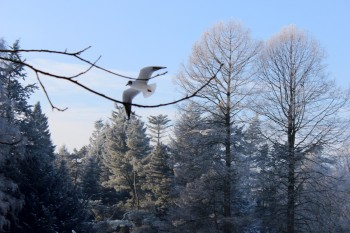 Wortkonfetti-Blog-Bremen-Winter-Buergerpark-11