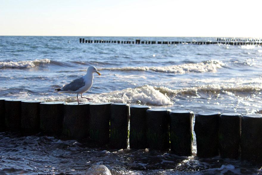 Wortkonfetti-Blog-Nordsee-Ostsee-Kuehlungsborn02
