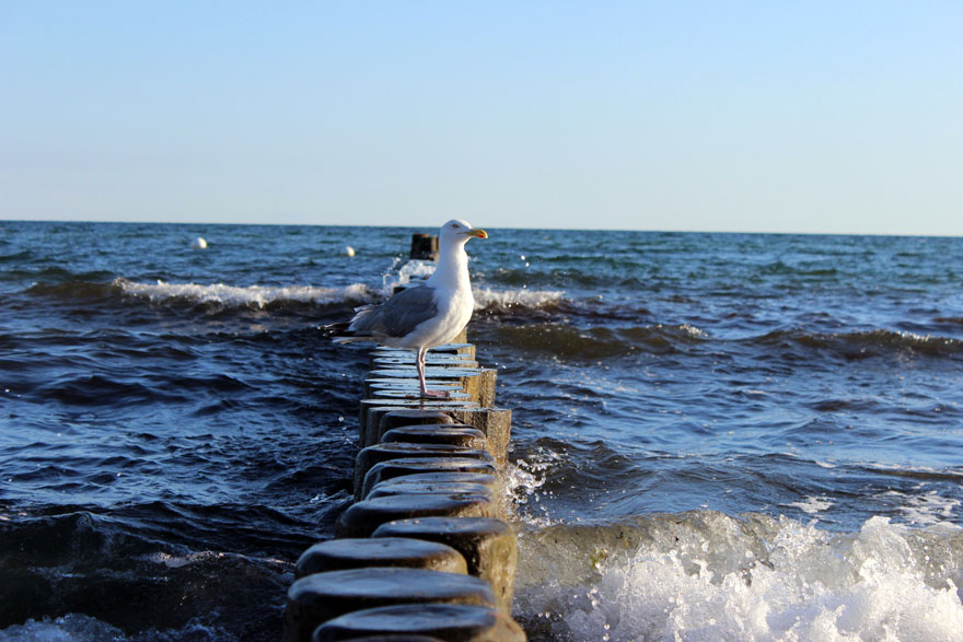 Wortkonfetti-Blog-Nordsee-Ostsee-Kuehlungsborn04