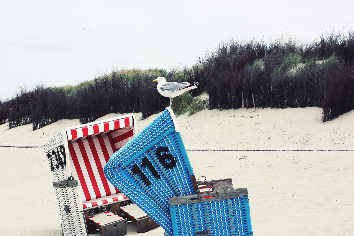 langeoog strandkorb möwe