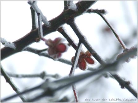 winterblueten-sylt_web